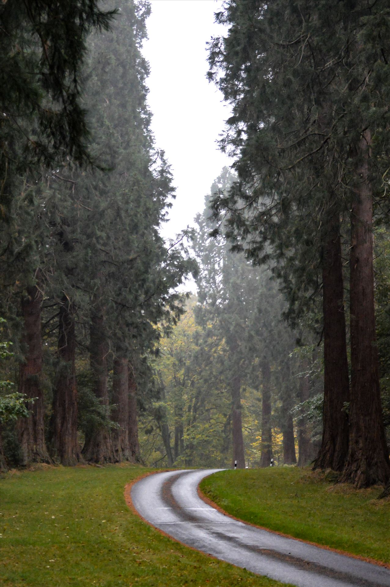Redwood Tree\'s Minsteracres Retreat - This is the sight you see driving up to Minsteracres retreat centre by AJ Stoves Photography